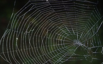 Spider Web pictured against a green, outdoor background