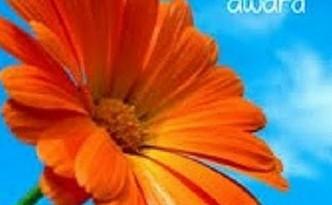 Orange Sunflower used as the emblem of the Sunshine Award for Blogging