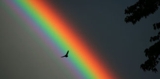 Solitary bird against a rainbow backdrop.