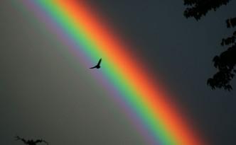 Solitary bird against a rainbow backdrop.