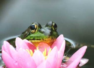 Frog and lily pad flower
