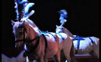 All the white horses . . . a new act at Circus Gerbola.