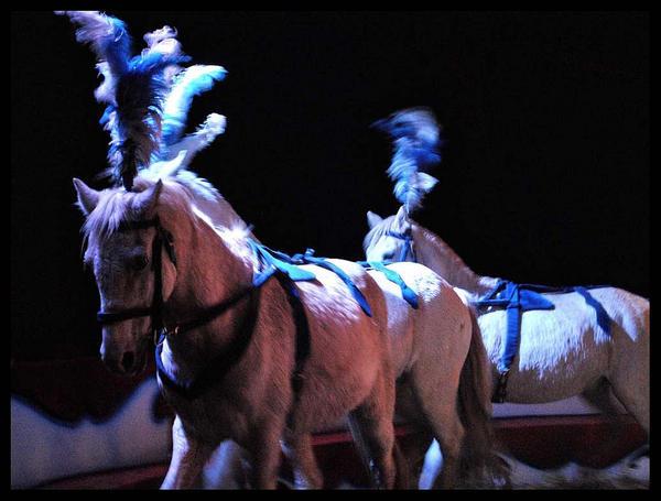 Gerbola Horses