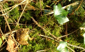 Frog in the woods.