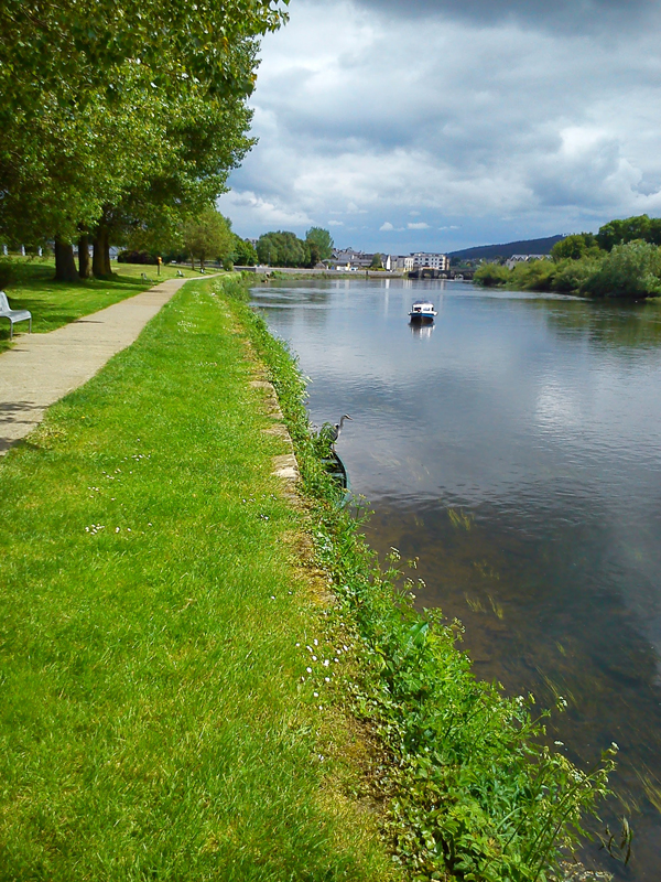 Stunning riverside scene at Carrick-on-Suir, complete with heron.