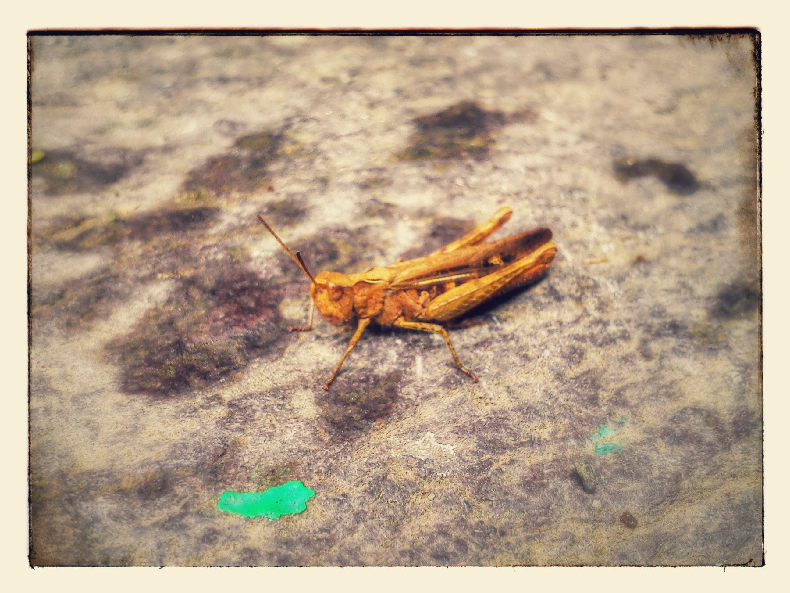 Grasshopper on doorstep.