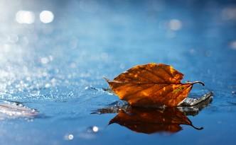 Orange leaf on ice.