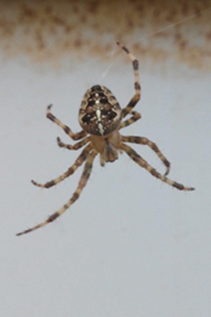 Poem 4: Haiku: A Spider's Small Web