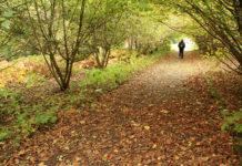 Leafy path.