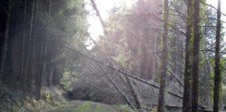 Fallen trees after a storm.