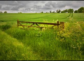 Gate in field
