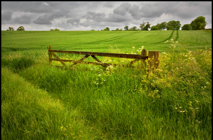Gate in field